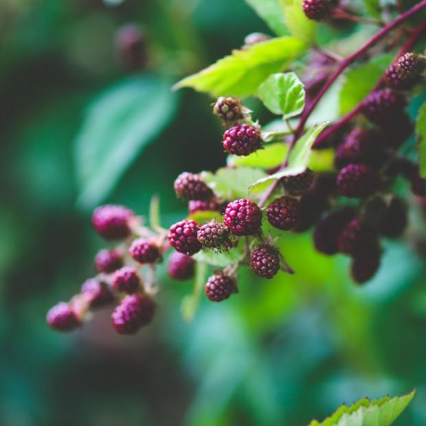 Seasonal fruit and vegetables